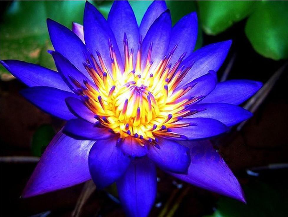 loto blu 2