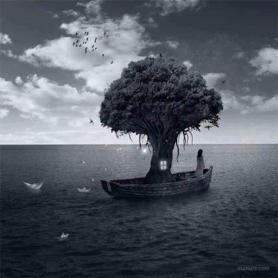albero e barca
